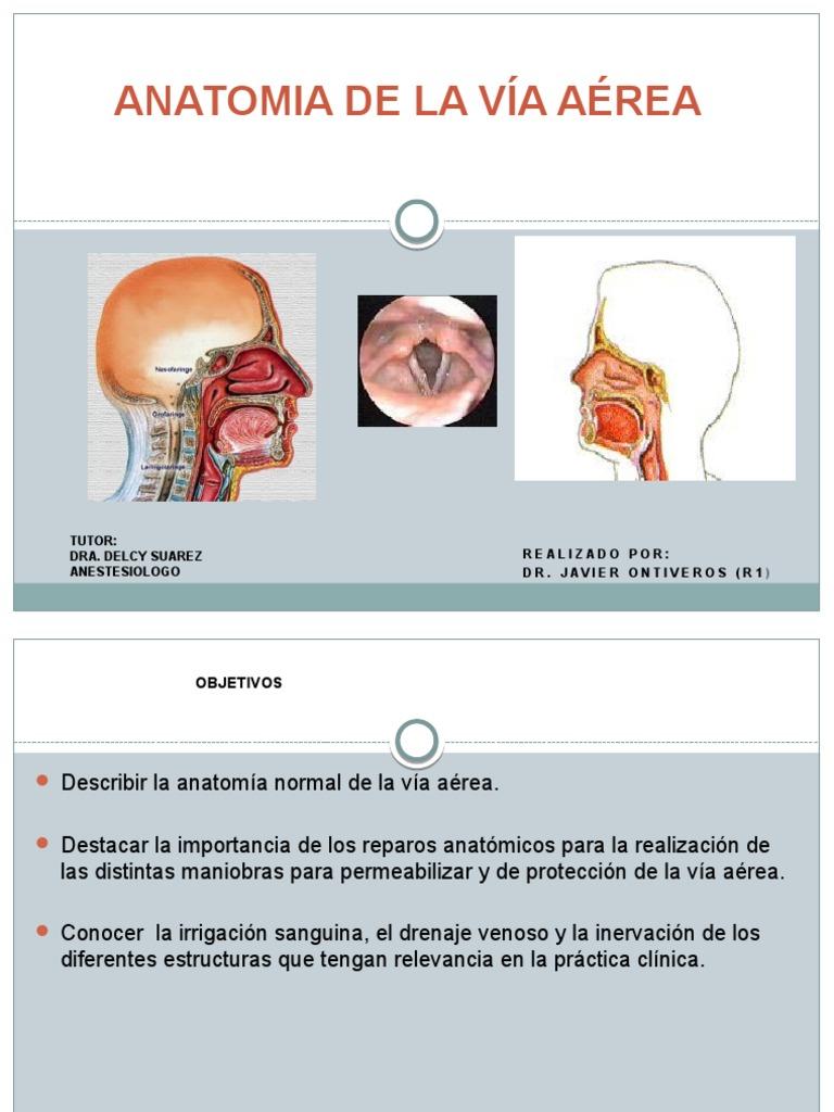 Atractivo La Anatomía De La Vía Aérea De Intubación Galería ...