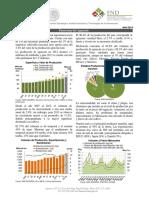 Ficha Aguacate.pdf