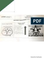 anatomia transcraneal