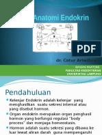 Anatomi Organ Endokrin