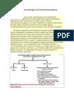 Sistemas-Mecanismos Biológicos de Control Homeostáticos