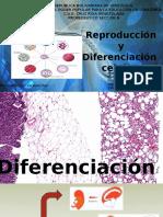 Biologia - Diferenciacion, Reproduccion