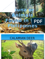 Fauna or Animals Found in the Philippines
