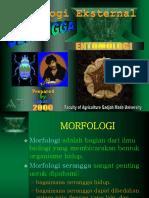 SUPUTA_UGM-2000 Morfologi Eksternal.pdf