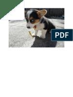 Cute dog.docx