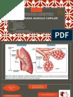 membrana alveolocapilar.pptx