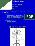 (6) saraf