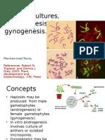 4# Haploid, Androgenesis Dan Gynogenesis_MRQ