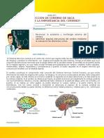 Disección de Cerebro