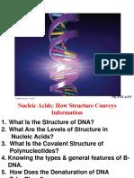 l2- Dna Structure