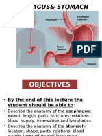 Esophagus and Stomach