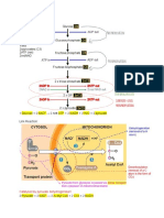 CellularRespirationandPhotosynthesis.pdf