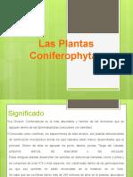 Las Coniferophytas