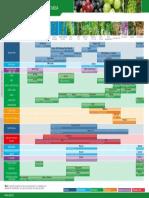 Programa-Uva-Mesa.pdf