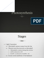 Photosynthesis HL