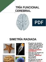 Asimetria Funcional Cerebral