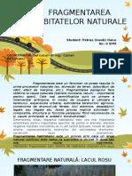 Fragmentarea Habitatelor Naturale Petras Oana