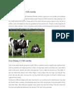 Cow Essay 1.docx