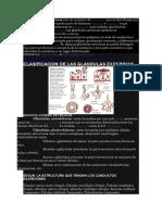 Las Glandulas Exocrinas y Endocrinas