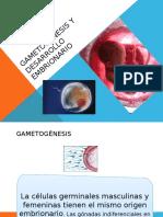 Gametogénesis y Desarrollo Embrionario