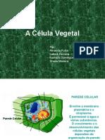 A Célula Vegetal