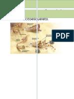 Enfermedad Con Alteraciones en La Estructura Del Citoesqueleto. Fisiologia del Cu