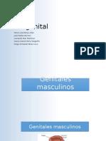 Semiología Urogenital