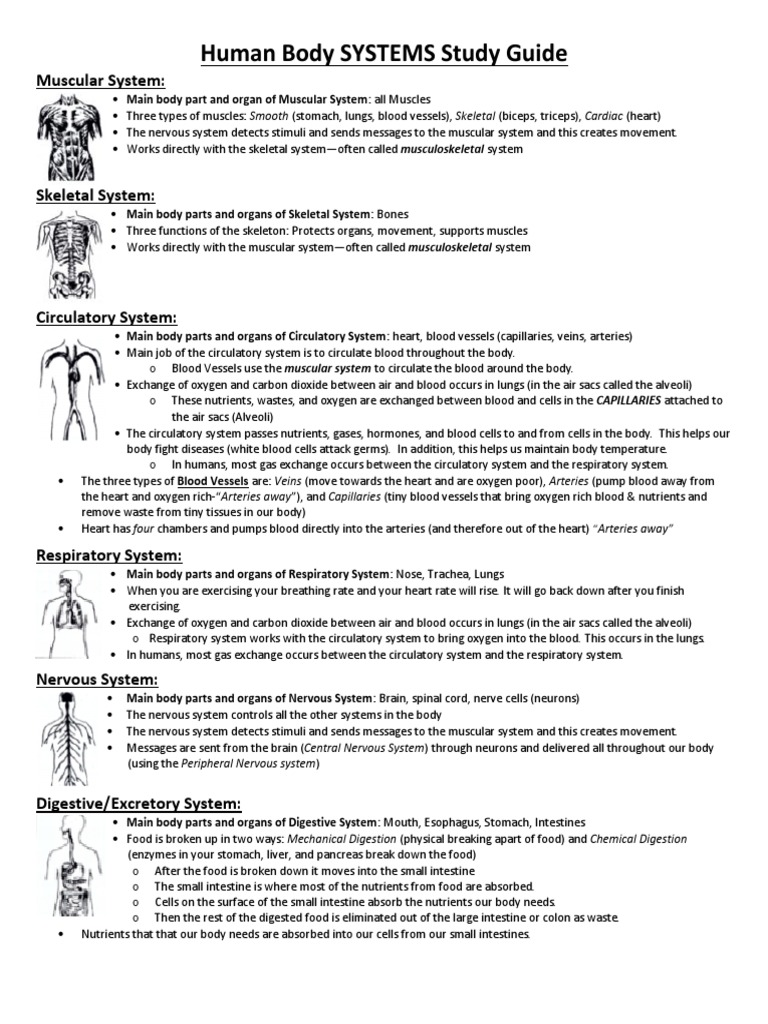 Human Body Systems Study Guide Respiratory System Circulatory System