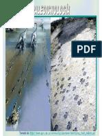 Paleoicnologia.pdf