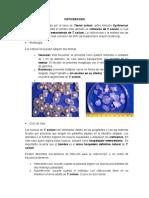Platyhelmintes- Cestodos (Larvas)
