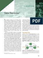 Ch 10 Gene Expression