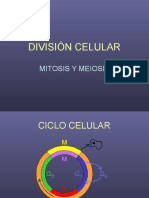 Division Celular2008