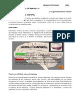 Tema 3 - Lobulos Temporales