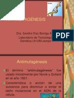 ANTIMUTAGÉNESIS
