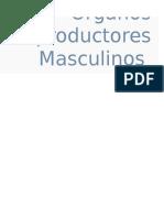 orgnos masculino