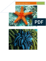 echinoderms for dummies