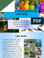 Diapo Evolución de Las Aves (1)