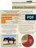 HORSES AND BURROS