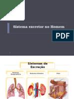 Sistema Excretor e Reprodutor