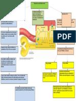 acidificacion de la orina.docx