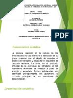 Actividad 5.1 Componente Auto-evaluativo Individual – Unidad 3 (Vias Catabolicas)