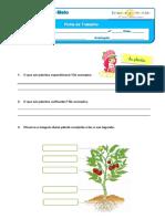 As Plantas (1)