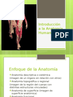 Introduccion a La Anatomia