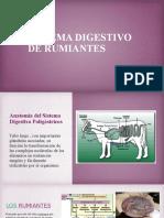 Sistema Digestivo de Rumiantes[1]