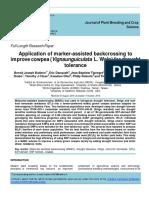 Document Bacj Crossing