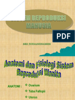 Sistem Reproduksi Manusia (2)