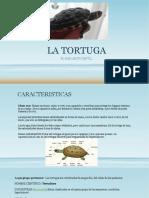 La Tortuga por Ana Centro