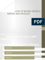 Histology of Blood Vessels Nerves and Muscles