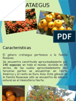 Género Crataegus en México