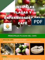 Biofertil Ponencia Café
